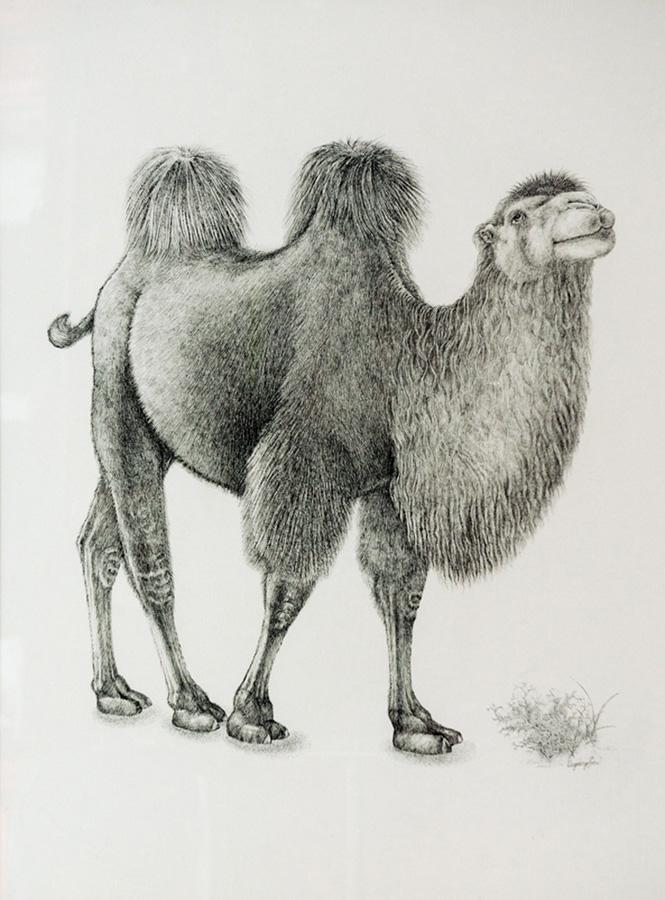 沙漠中的骆驼简笔画》沙漠骆驼》沙漠中的骆驼油画